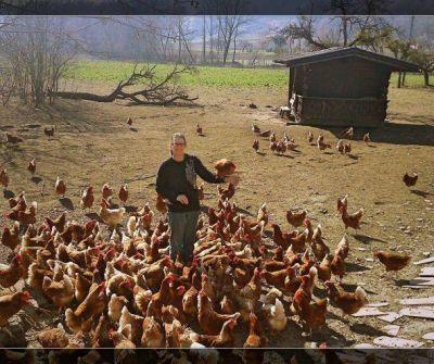 Glückliche Hennen, beste Eier